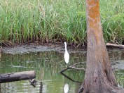 Birds of all different shapes and sizes also inhabit the swamp.